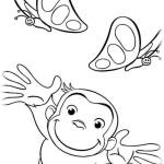 Coco Der neugierige Affe 4