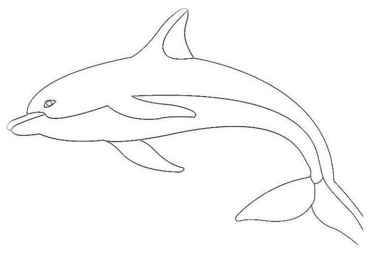 ausmalbilder für kinder delphine 6