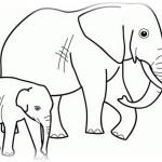 Elefant 11