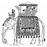 Elefant 12