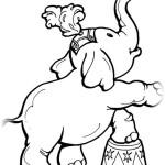 Elefant 13