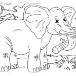 Elefant 14