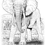 Elefant 15