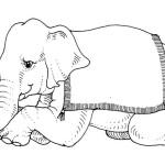 Elefant 16