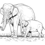 Elefant 19