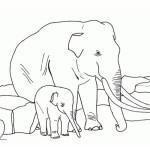Elefant 22