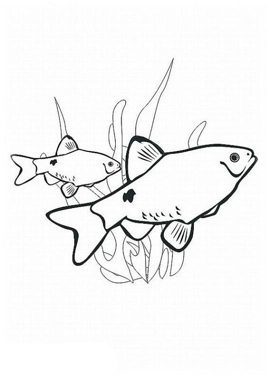 ausmalbilder für kinder fische 1