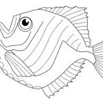 Fische 11