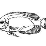 Fische 13