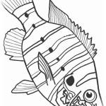 Fische 14