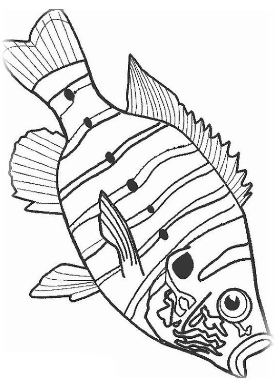 ausmalbilder für kinder fische 14