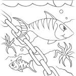 Fische 16