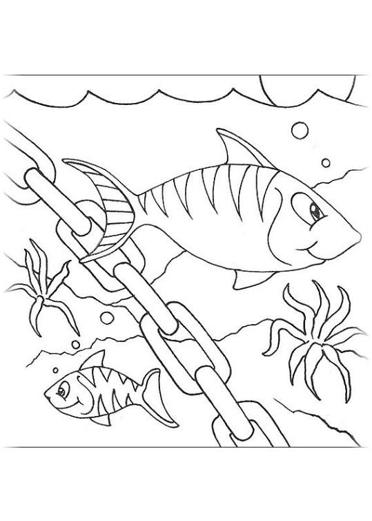 ausmalbilder für kinder fische 16
