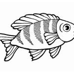 Fische 17