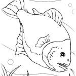 Fische 21