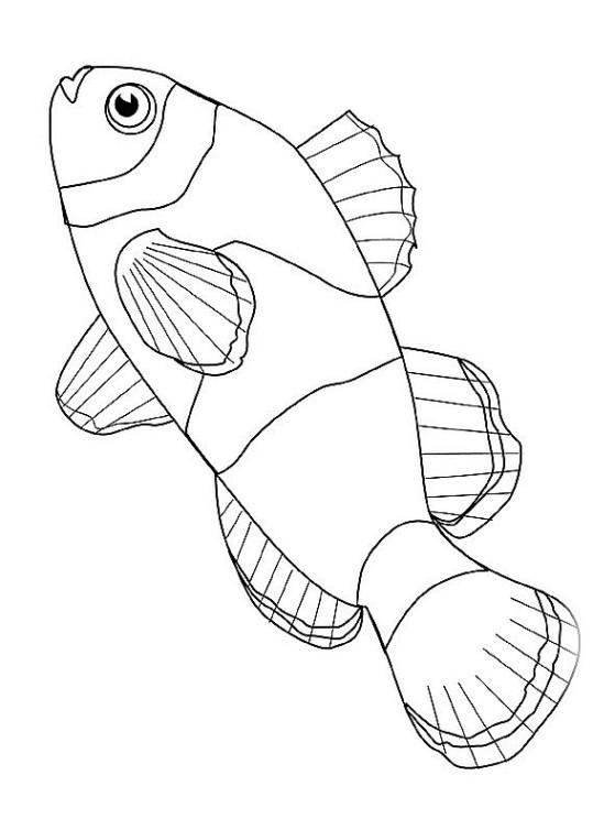 ausmalbilder für kinder fische 6