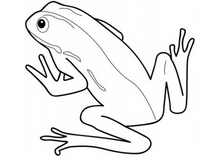 ausmalbilder für kinder frosch 6