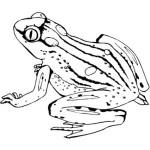 Frosch 9