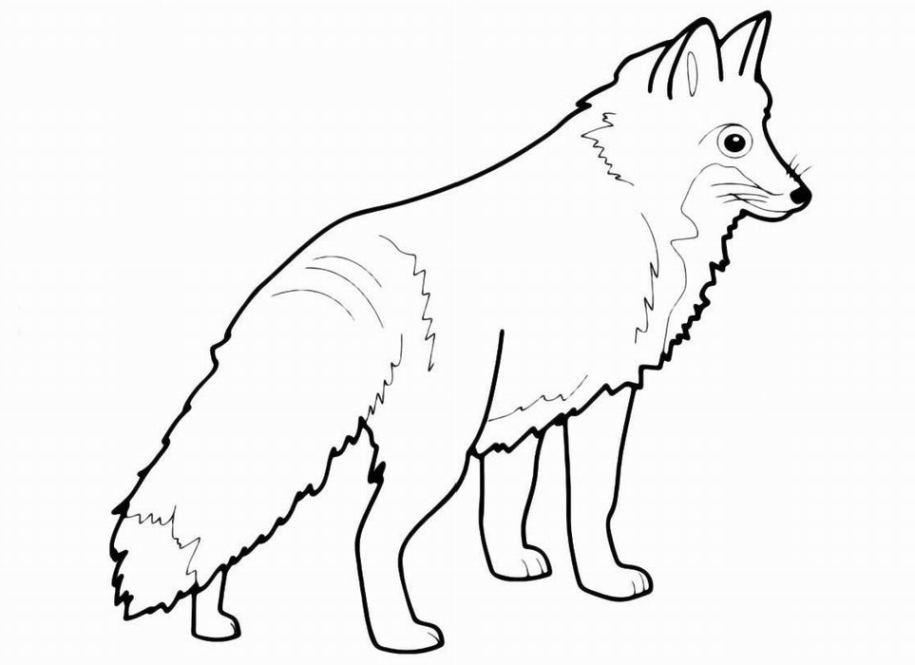 Ausmalbilder Für Kinder Fuchs 2