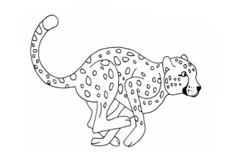 Ausmalbilder Für Kinder Gepard 5