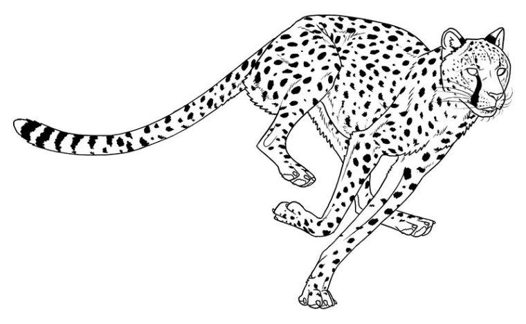 ausmalbilder für kinder gepard 6