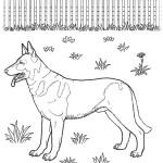 Hunde 15