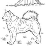 Hunde 17