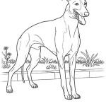 Hunde 18
