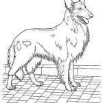 Hunde 6