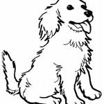 Hunde 7