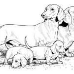 Hunde 9