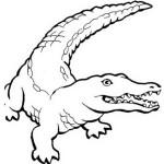 Krokodil 11