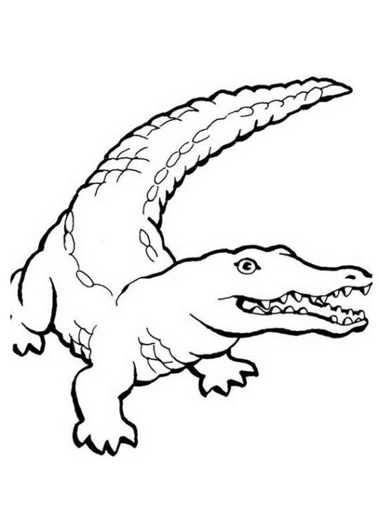 ausmalbilder für kinder krokodil 11