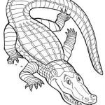 Krokodil 12