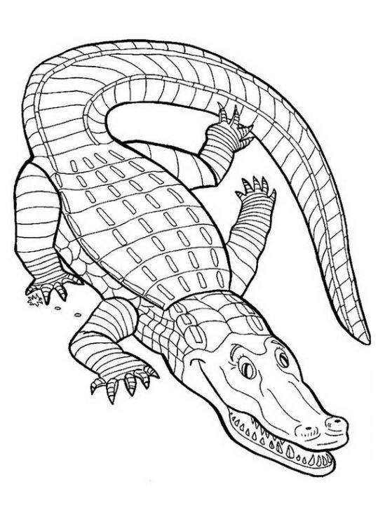 Ausmalbilder F 252 R Kinder Krokodil 12