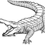 Krokodil 19