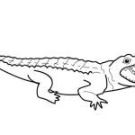 Krokodil 21