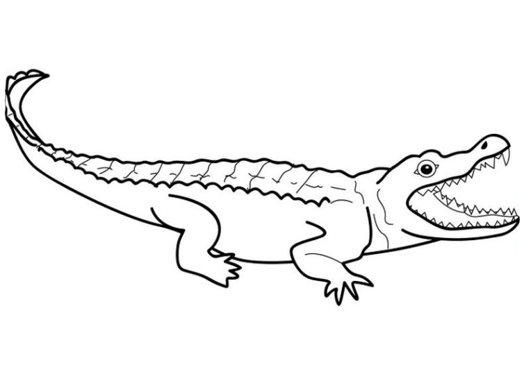 Crocodile drawing outline