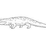 Krokodil 6