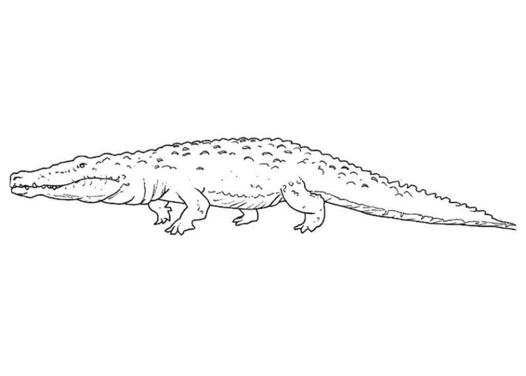 Ausmalbilder für Kinder Krokodil 6