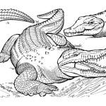 Krokodil 7