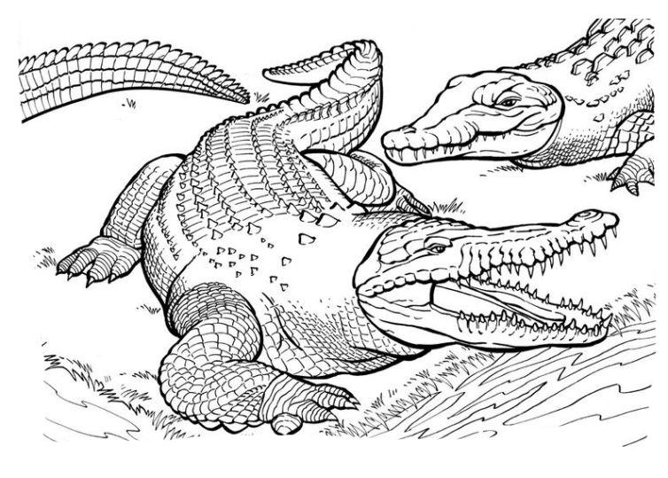 Krokodil Ausmalbilder Malvorlagen kostenlos ausdrucken