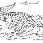 Krokodil 8