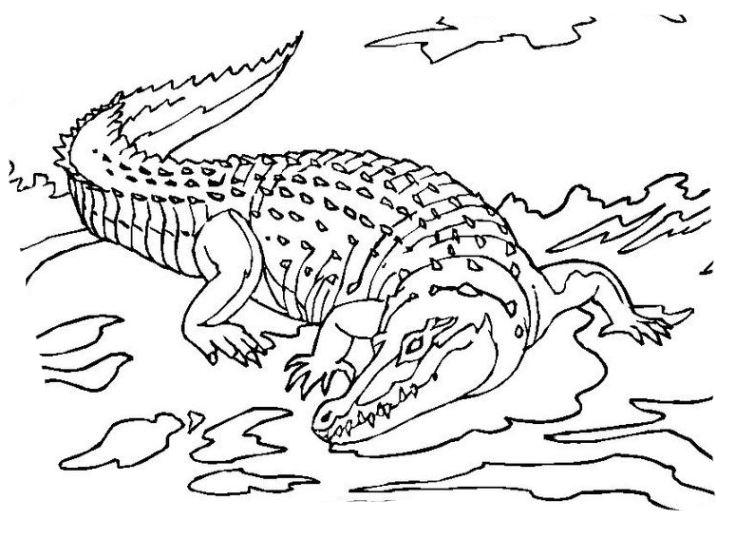 Ausmalbilder für Kinder Krokodil 8