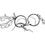 Obst und Gemuse 11