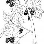 Obst und Gemuse 12
