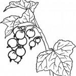 Obst und Gemuse 14