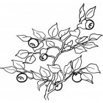 Obst und Gemuse 15
