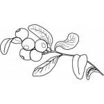 Obst und Gemuse 18