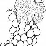 Obst und Gemuse 19